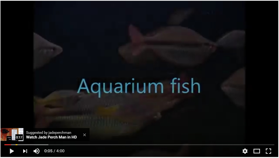 Aquarium fish farming